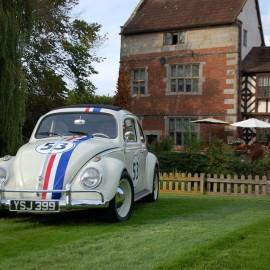 Herbie On Lawn